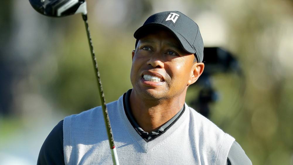 Tiger loses ball in eucalyptus tree on 11